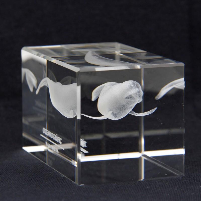Metacrilato Beluga Oceanogràfic