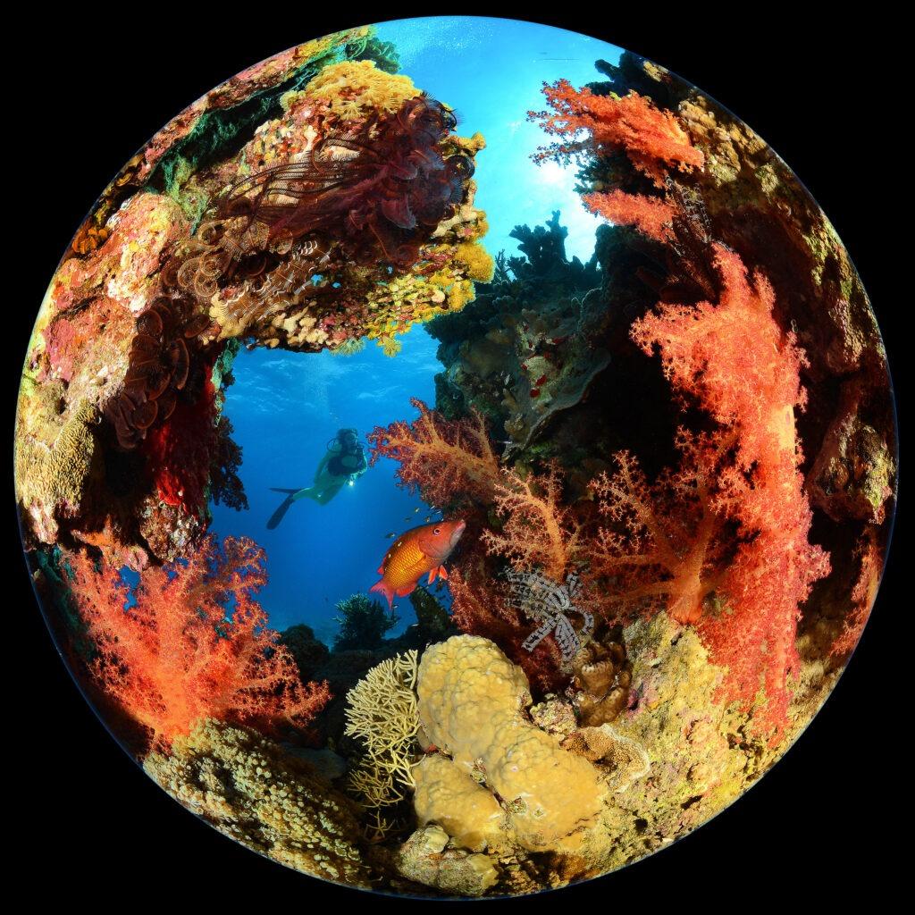 SeaGardenWorld-STEFANO PROAKIS ITALIA (2)