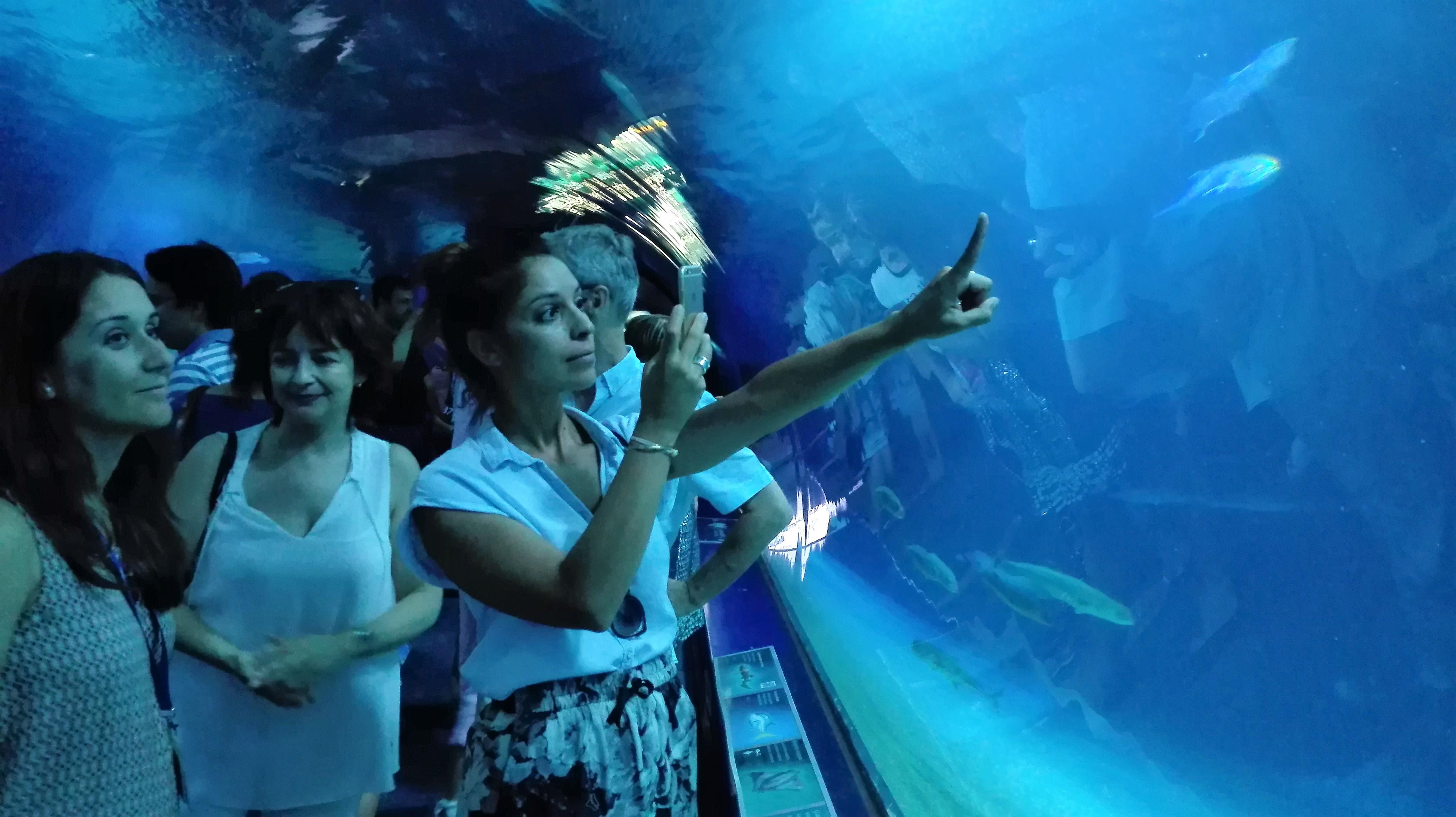 Periodistas de Toulouse visitan el Oceanografic