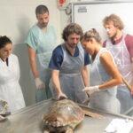 La Fundación Oceanográfic expone sus trabajos en la Sociedad Española de Cetáceos