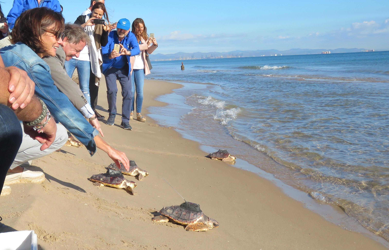 suelta de tortugas