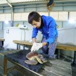 Una tortuga rescatada en San Javier se recupera en el Oceanogràfic de València