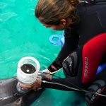 Fundación Oceanogràfic cumple su primer año