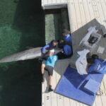 El investigador del Oceanogràfic, Andreas Fahlman, estudia el funcionamiento del corazón de los delfines