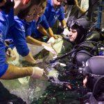 Nuevos 'sensores-tirita' permitirán explorar de forma exhaustiva los océanos y su biodiversidad