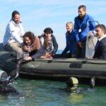 El Oceanogràfic suelta 20 tiburones juveniles por primera vez en España