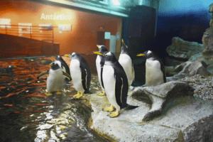 Pinguino Juanito