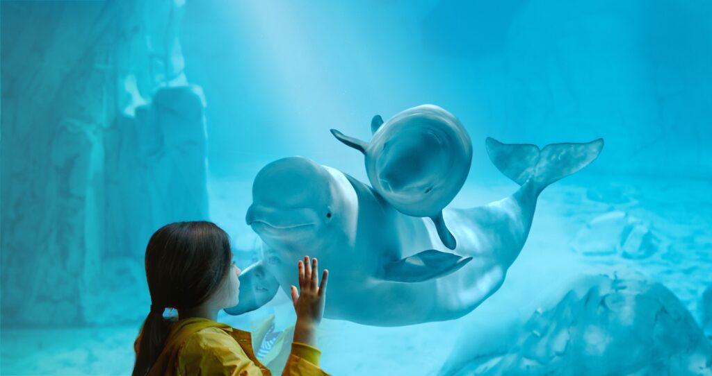 Kylu, la cría de beluga