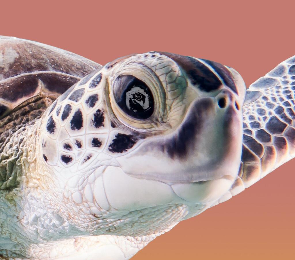 La Face Cachée de l'Aquarium