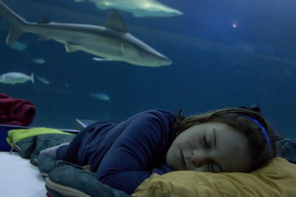 Sleeping with sharks