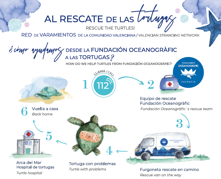 rescate tortugas
