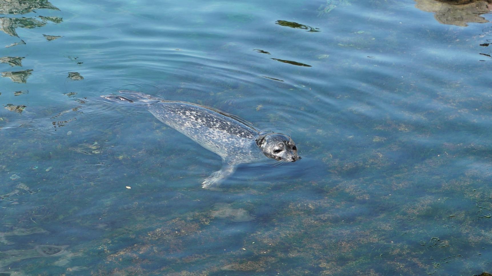 Sam ya nada en el acuario exterior de la zona de Templados